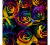 Роза Радуга Еквадор