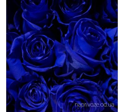 Роза синяя Эквадор