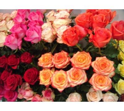 Роза оптом Эквадор