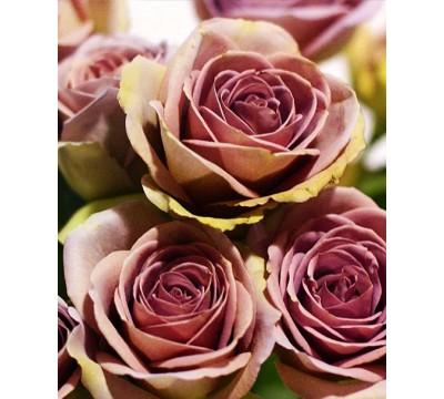 Пепельно-лавандовая  Роза