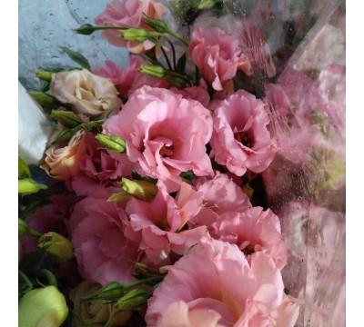 Эустома - китайская роза