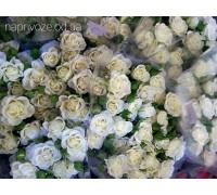 Роза Спрей белая Украина