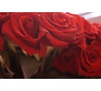Роза укр производитель
