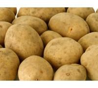 Картошка Лимонка