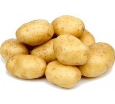 Картошка оптом на  Привозе